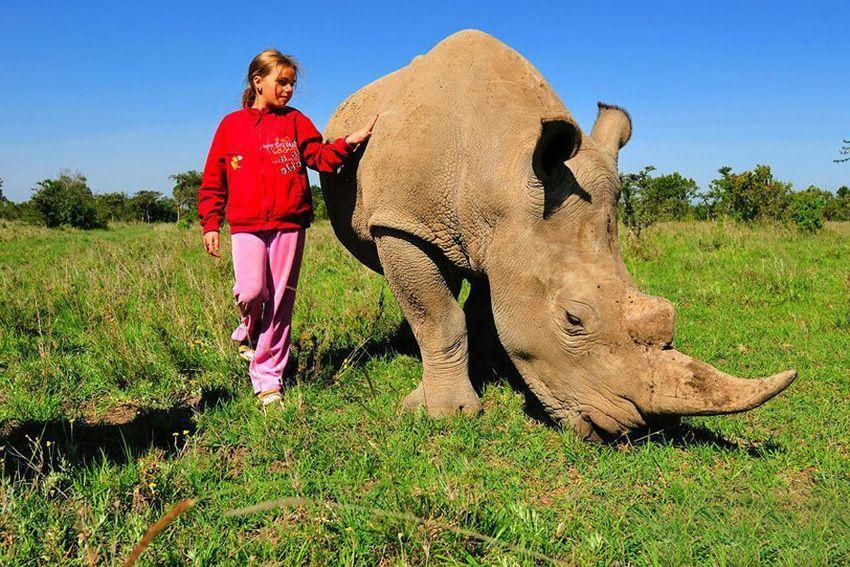 girl-and-rhino