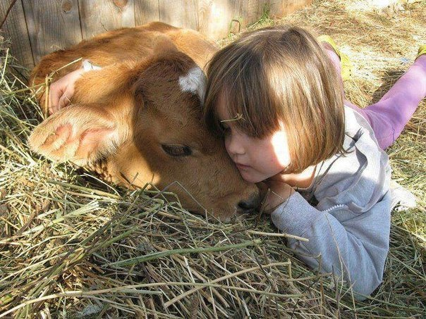 girl-and-cow