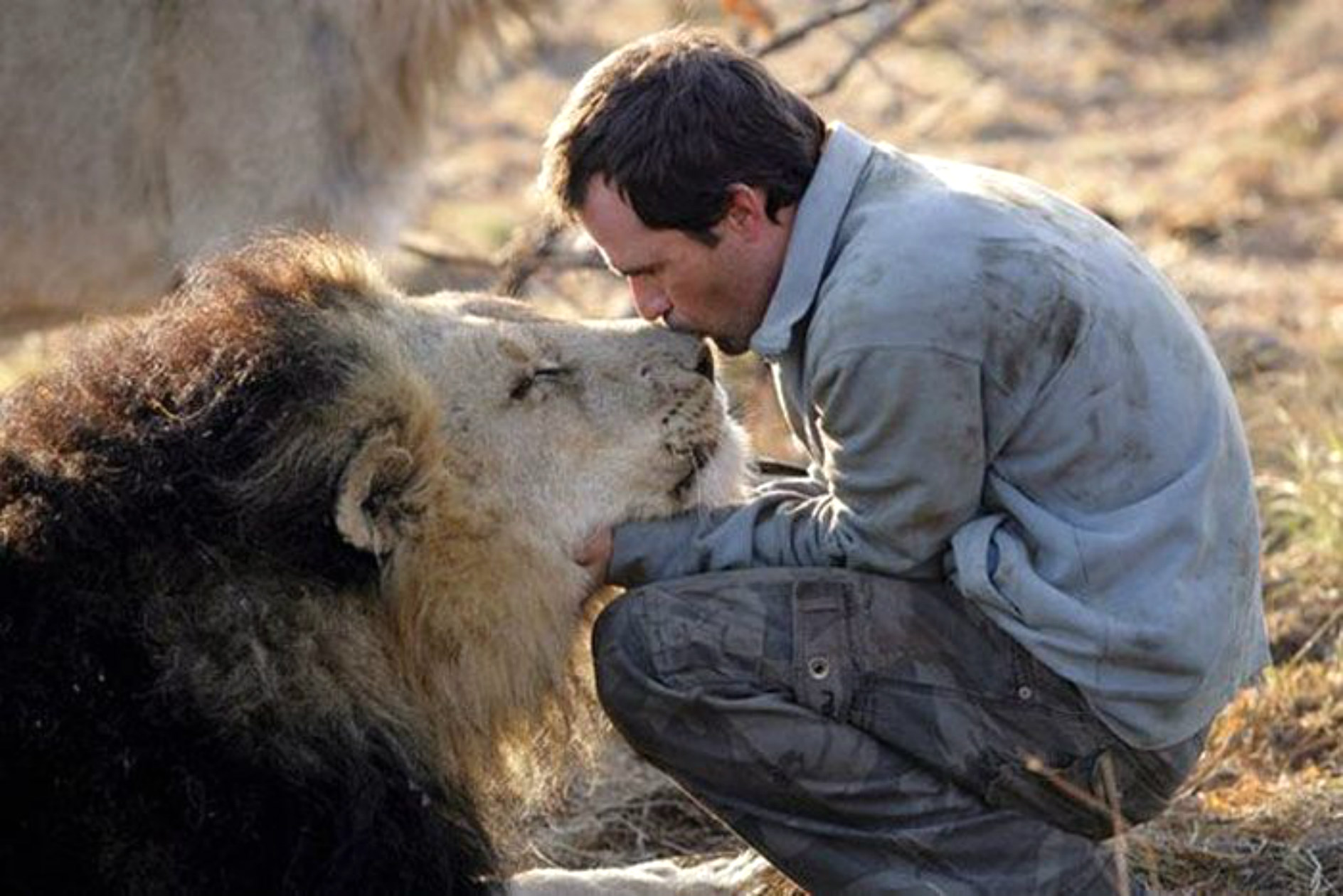 man-kisses-lion