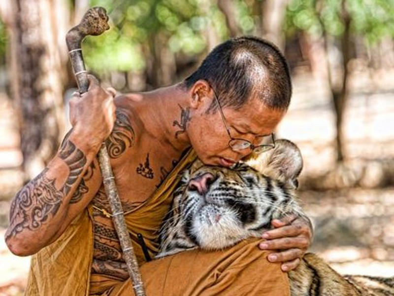 monk-and-tiger