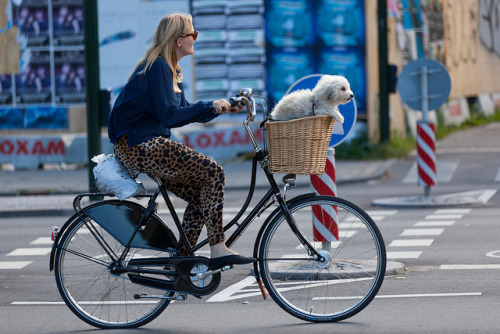 on-bike-with-dog